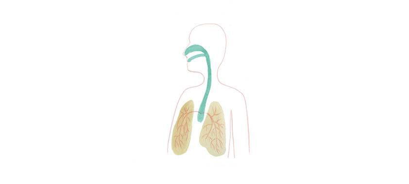 Atmung-1